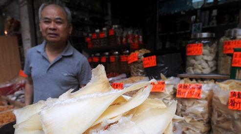 115077537 - В Нью-Йорке запретят потребление акульих плавников