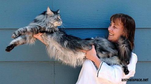 1318365660 image.png - В Неваде скончался самый длинный в мире кот
