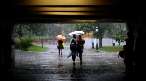 175692650 - В Москве дождь и ветер привели к жертвам