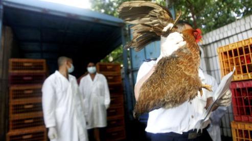 71379337 - Вспышка птичьего гриппа в Китае