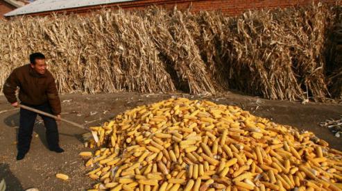 72864872 - Пестициды губят жизнь китайских фермеров