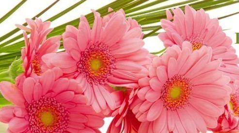 9 7 - Цветы на Татьянин день