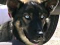 Считавшийся утонувшим пёс нашелся через 5 недель