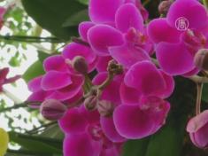 Дивные орхидеи украсили оранжерею в Нью-Йорке