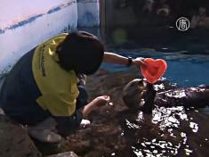 Выдрам дарят съедобные сердца на День влюблённых