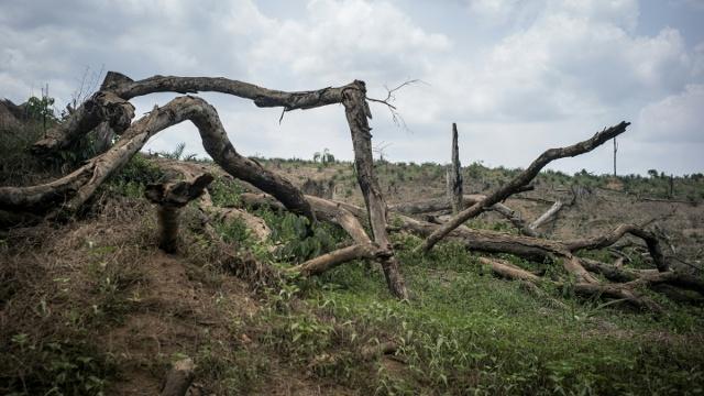 Более 20% видов наземных растений могут исчезнуть