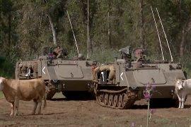 Пастухи в Израиле облюбовали пастбища среди танков