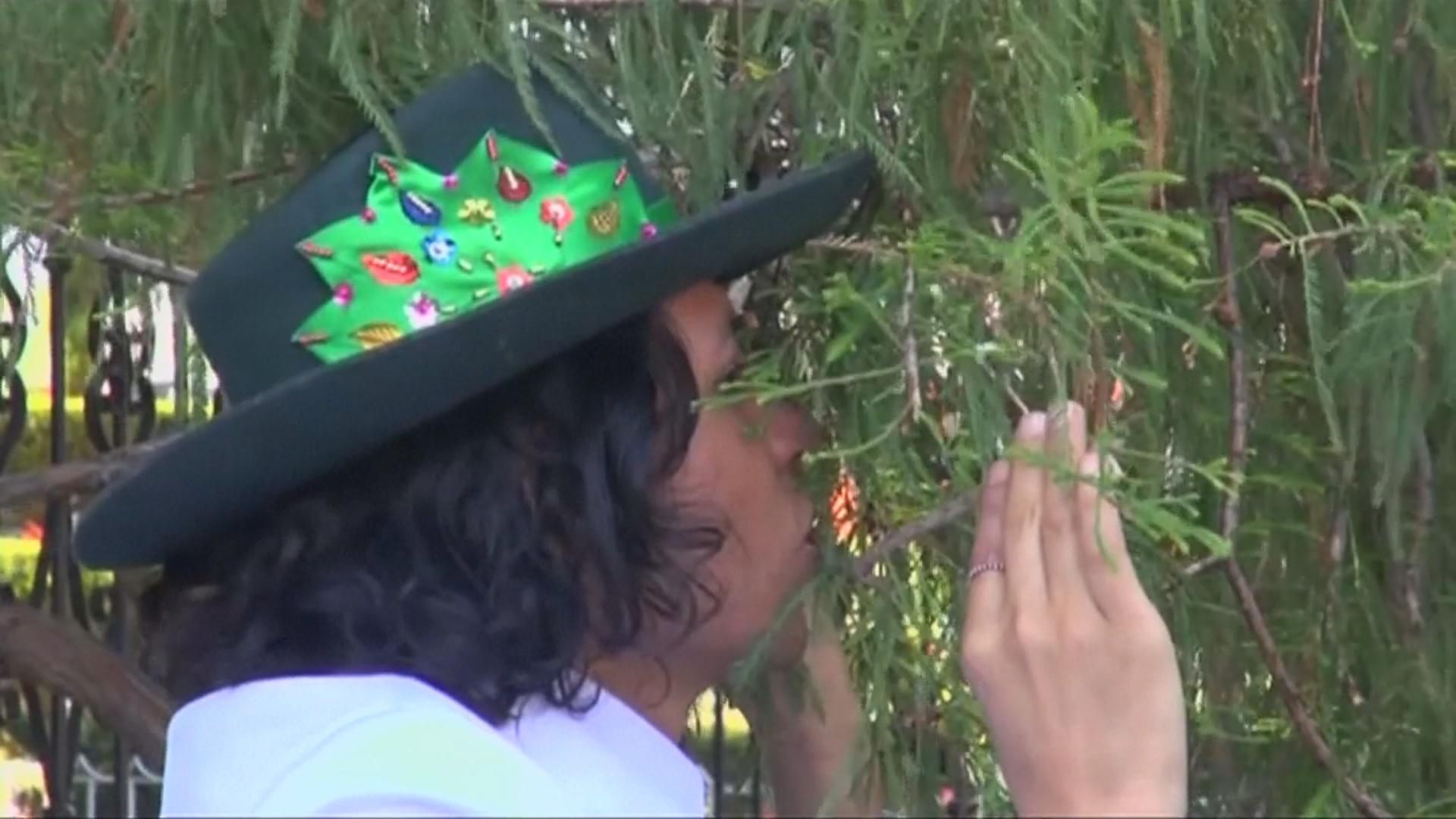 Перуанский эколог женился на дереве