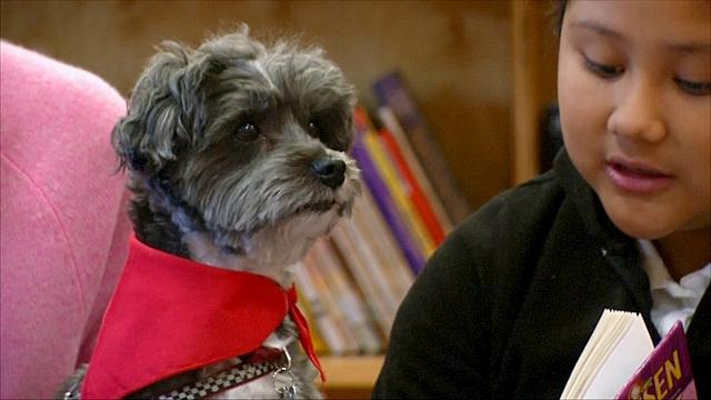 Собаки помогают детям мигрантов научиться читать