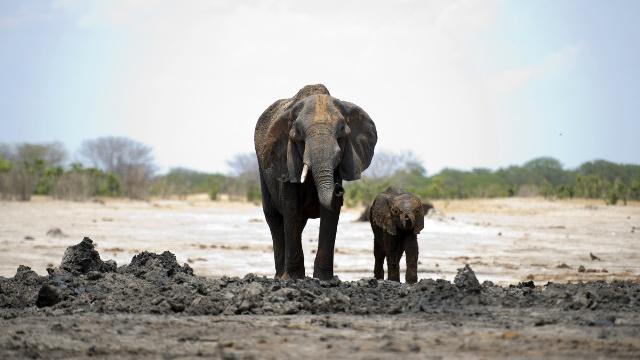 Зимбабве из-за засухи продаёт диких животных