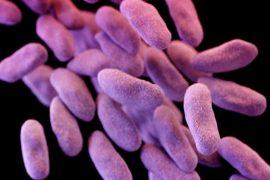 В США нашли бактерию, устойчивую к антибиотикам