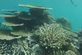 Большой барьерный риф обесцвечен на 35%