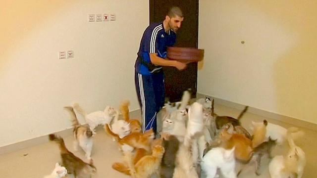 Мужчина содержит приют для кошек в своей квартире