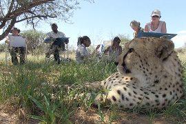 Намибия предлагает арт-сафари