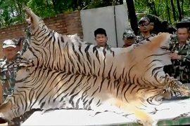 Трёх тайских монахов подозревают в убийстве тигров