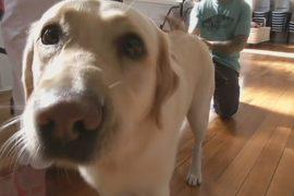 Собаки-терапевты проходят собеседования
