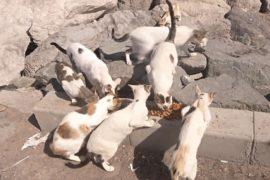 Кошки заполонили заброшенный остров в ОАЭ