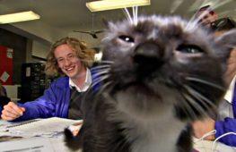 В Австралии применяют кошкотерапию для выпускников