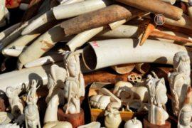 Гонконг наложит полный запрет на слоновую кость