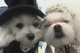 Собачий фестиваль прошёл в Беверли-Хиллс