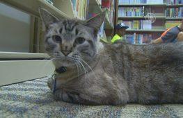 Библиотечный кот оказался в центре скандала