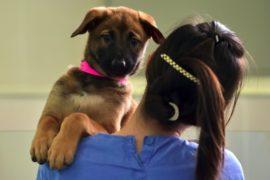 В Южной Корее легализуют услуги животным