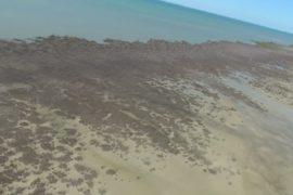 В Австралии за месяц погиб мангровый лес