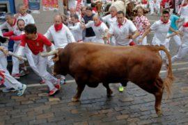 В Памплоне продолжаются популярные забеги с быками