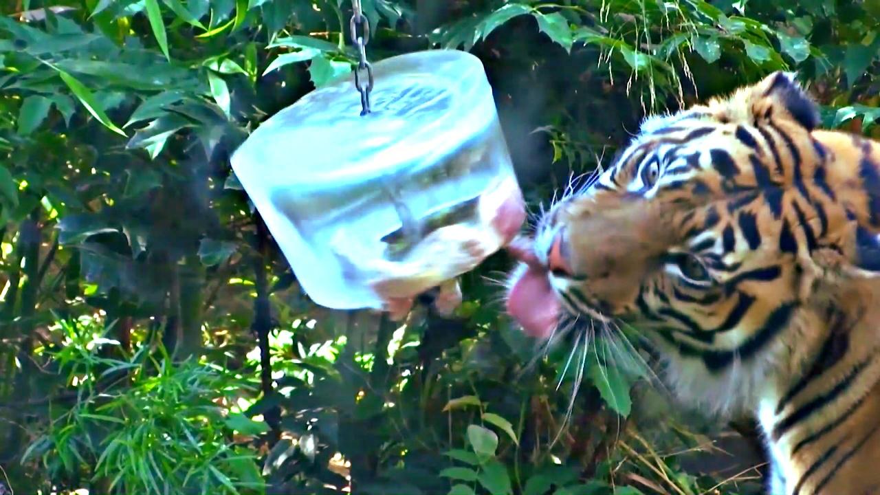 Питомцам зоопарка в Риме подают ледяные лакомства