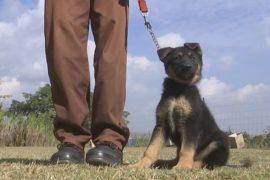 В ЮАР разводят дефицитных рабочих собак