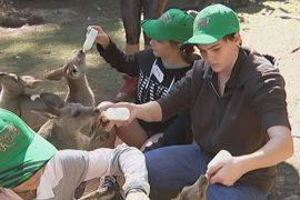 Юных австралийцев учат быть смотрителями зоопарка