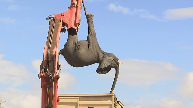 В Малави переселяют 500 слонов