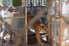 Калифорния: спасенных от пожара зверей возвращают домой