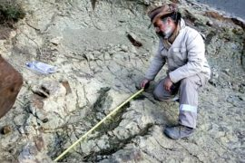 В Боливии нашли огромный след динозавра