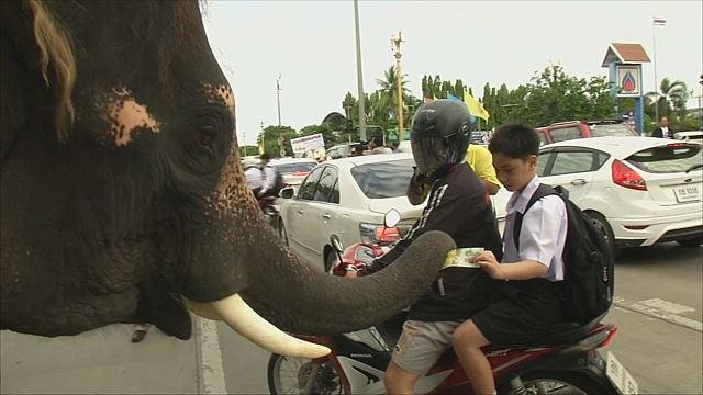 Тайские слоны помогают в политической агитации