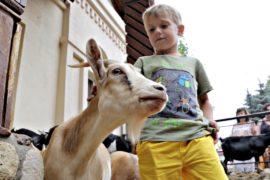 5-летний Илья – юный гид Московского зоопарка