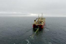 Чрезмерное рыболовство угрожает экосистеме Арктики