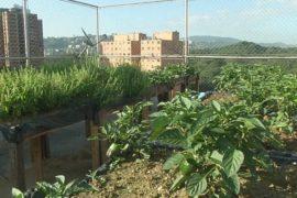 Венесуэльцев призывают выращивать овощи и фрукты на крышах