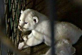В разрушенном наводнением зоопарке Тбилиси – пополнение