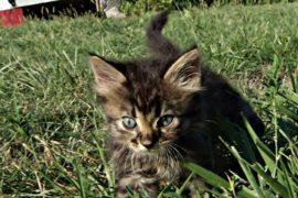 Как котёнка вытаскивали из канализационной трубы
