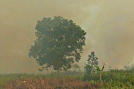 Власти Индонезии: лесные пожары пока под контролем