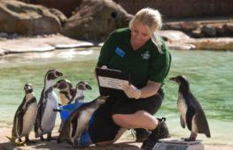 В Лондонском зоопарке прошло ежегодное взвешивание