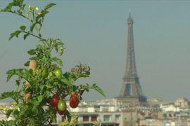 Крыши Парижа: плацдарм для городского огорода