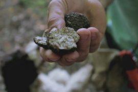 Болгары зарабатывают на поисках трюфелей