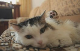 В России кошка стала приёмной мамой для обезьянки