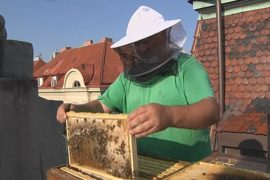 Крышу пражской мэрии облюбовали пчёлы