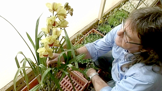 Австралиец превратил любовь к орхидеям в профессию