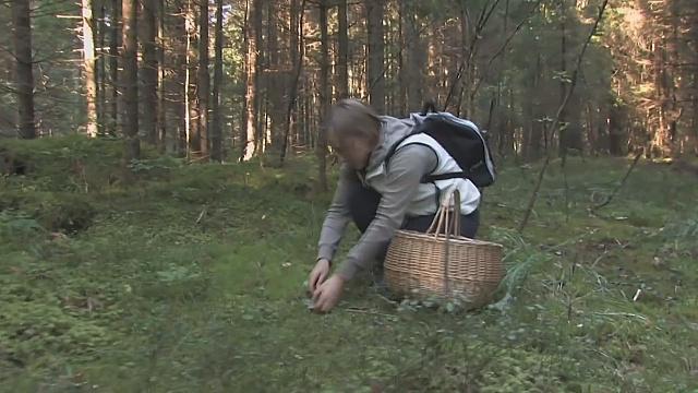 Как в Латвии состязаются грибники