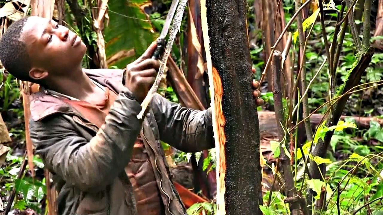 Камерунцев обучают заботиться об африканской сливе