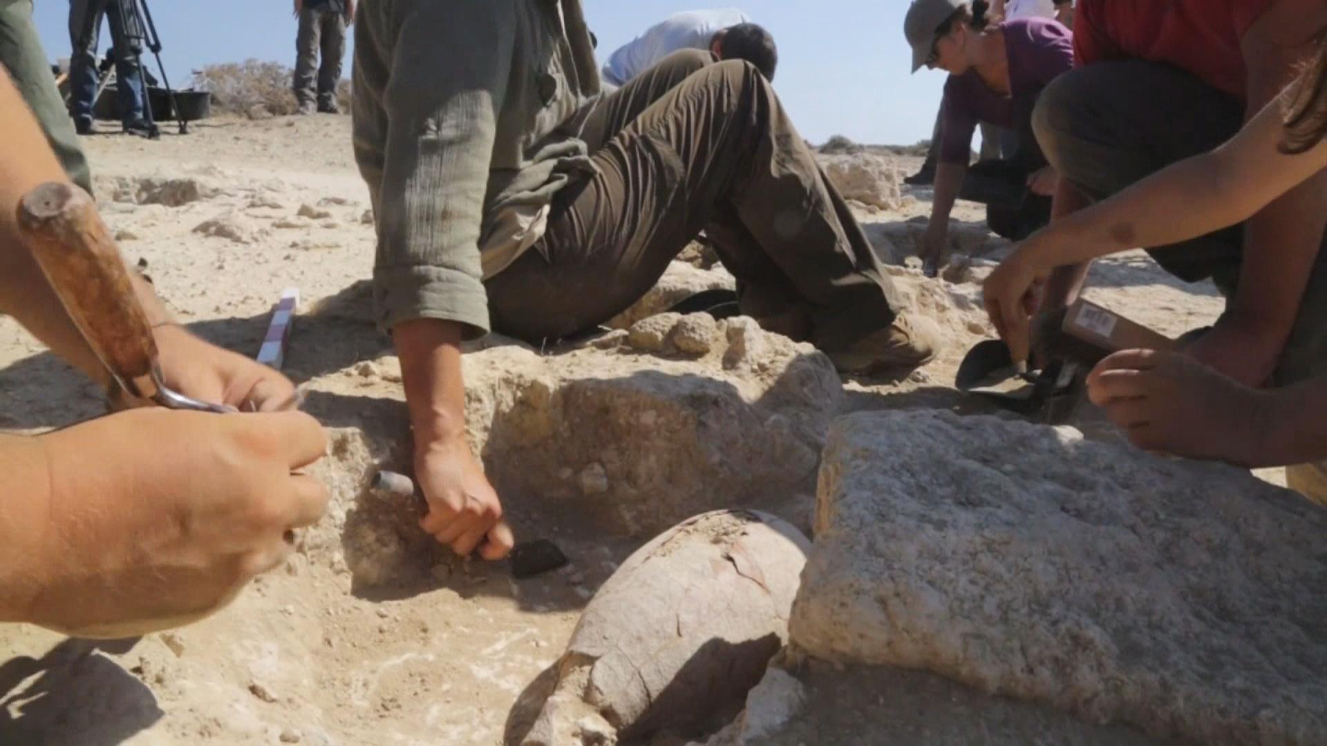 Раненых британских солдат приобщают к археологии